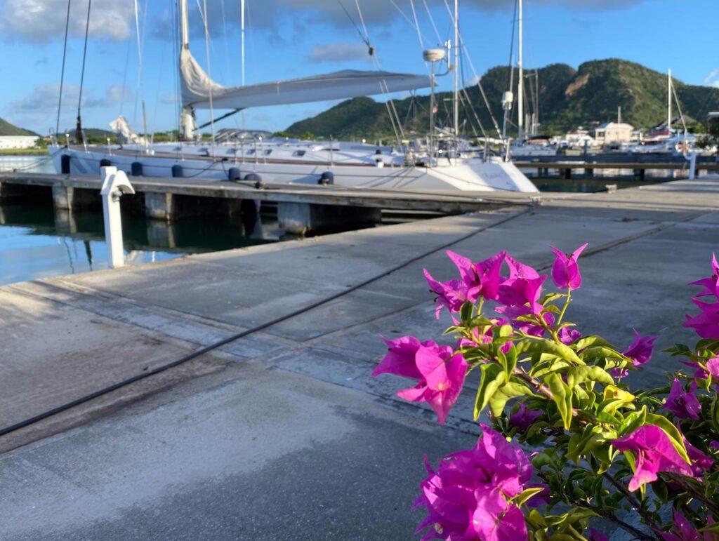 dockside flowers