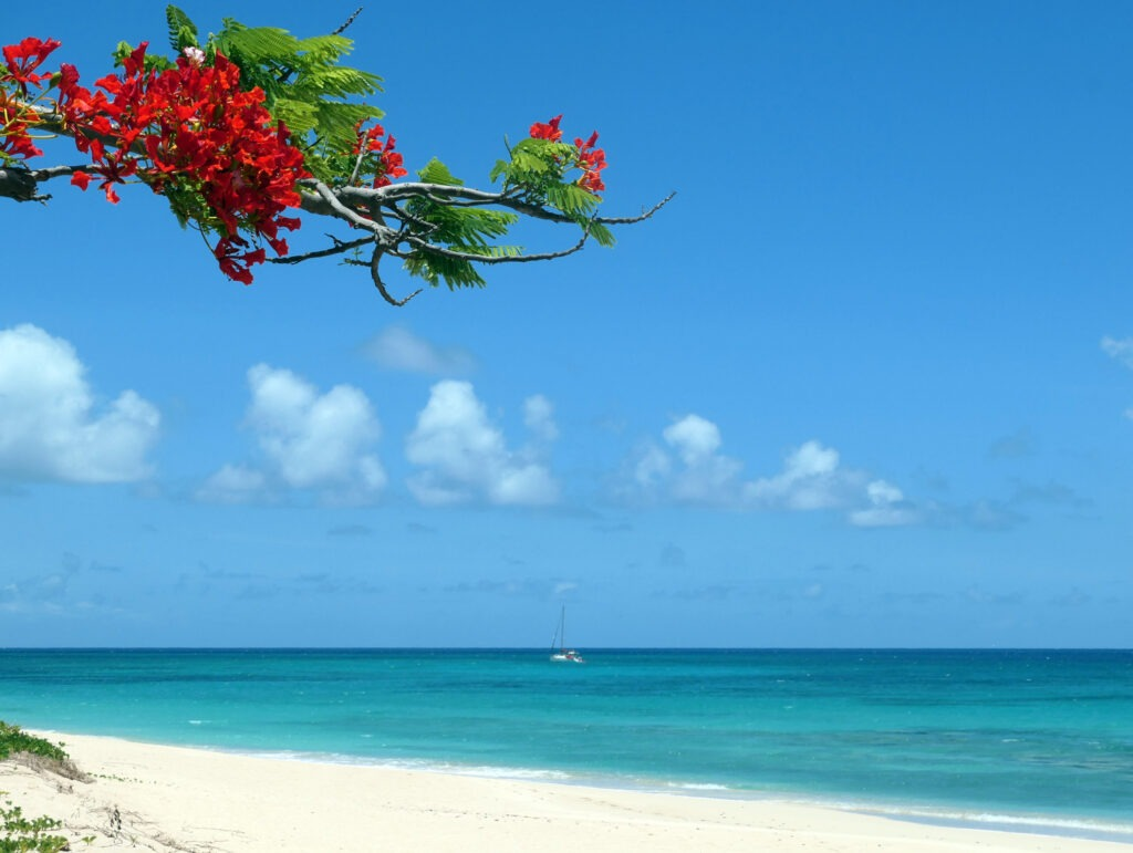 Jolly Harbour has beautiful beaches